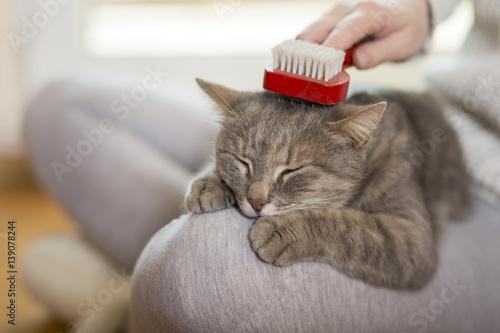 Keuken foto achterwand Kat Brushing the cat