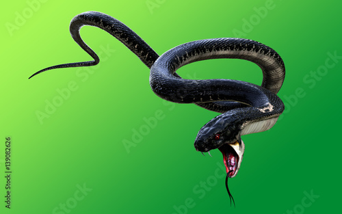 Carta da parati 3d King Cobra Black Snake The world's longest venomous snake isolated on green b