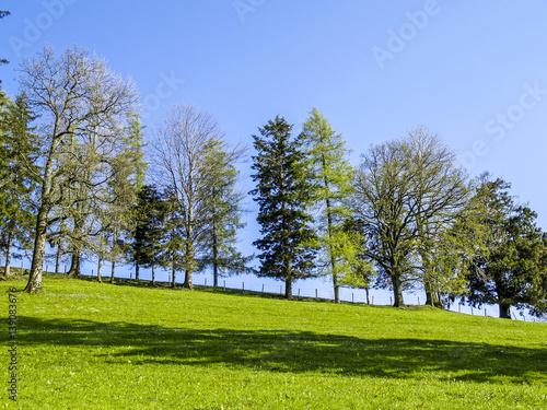 Tree Row Deciduous Trees An Conifers Austria Lower Austria Mo