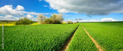 Foto op Aluminium Weide, Moeras Landschaft im Frühling, grünes Feld, Traktorspur