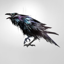 Drawn Isolated Colored Bird Si...