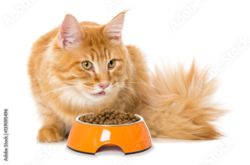 Fotografie, Obraz  Katze mit Futterschüssel