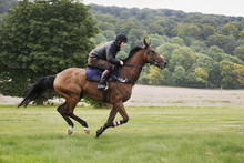 Man On A Bay Horse Galloping A...