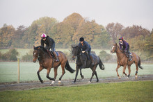 Race Horses On The Gallops. Three Riders And Horses Galloping Along A Cinder Path.