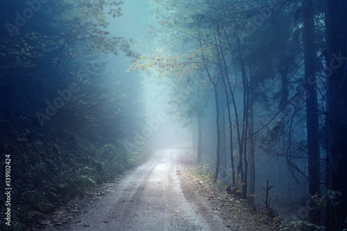 Fotobehang Bossen Dreamy evening autumn color foggy forest road. Scary dark blue green colored countryside woodland.