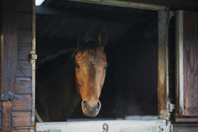 Horse Looking Out Of Stable Door
