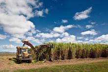 Sugar Cane Harvesting In Queen...
