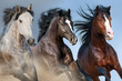 Horse herd run close up portrait against blue sky