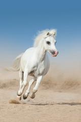 White pony run fast in desert dust