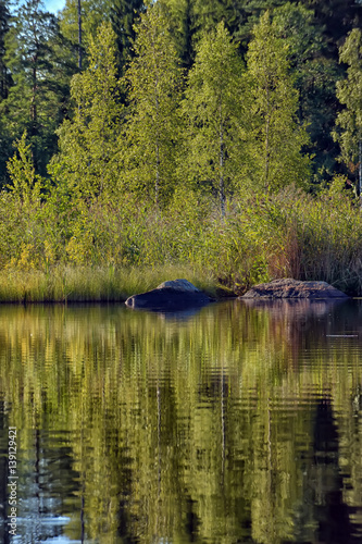 Forest near the water and reflection.