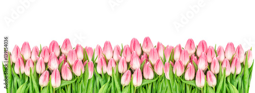 Foto op Plexiglas Tulp Spring tulip flowers isolated white background Floral banner