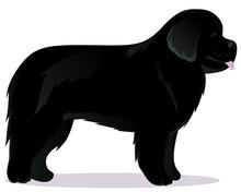 Newfoundland Dog Black