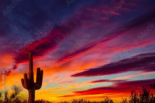 Photo sur Aluminium Arizona Arizona desert landscape with Siguaro Cactus in silohouette