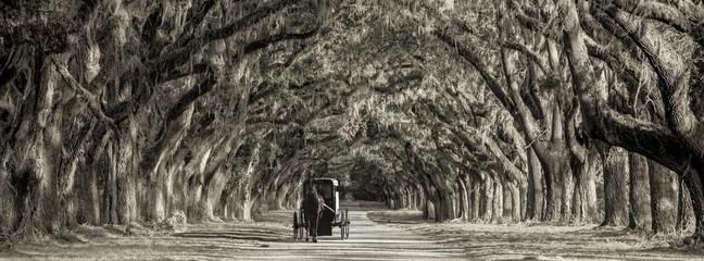 Horse drawn carriage on plantation, bw image