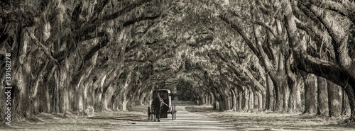 Fototapety, obrazy: Horse drawn carriage on plantation, bw image