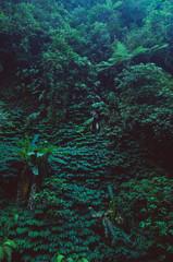 Fototapetatropical rain forest, green wall background