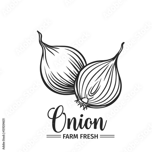 Photo Hand drawn onion icon.