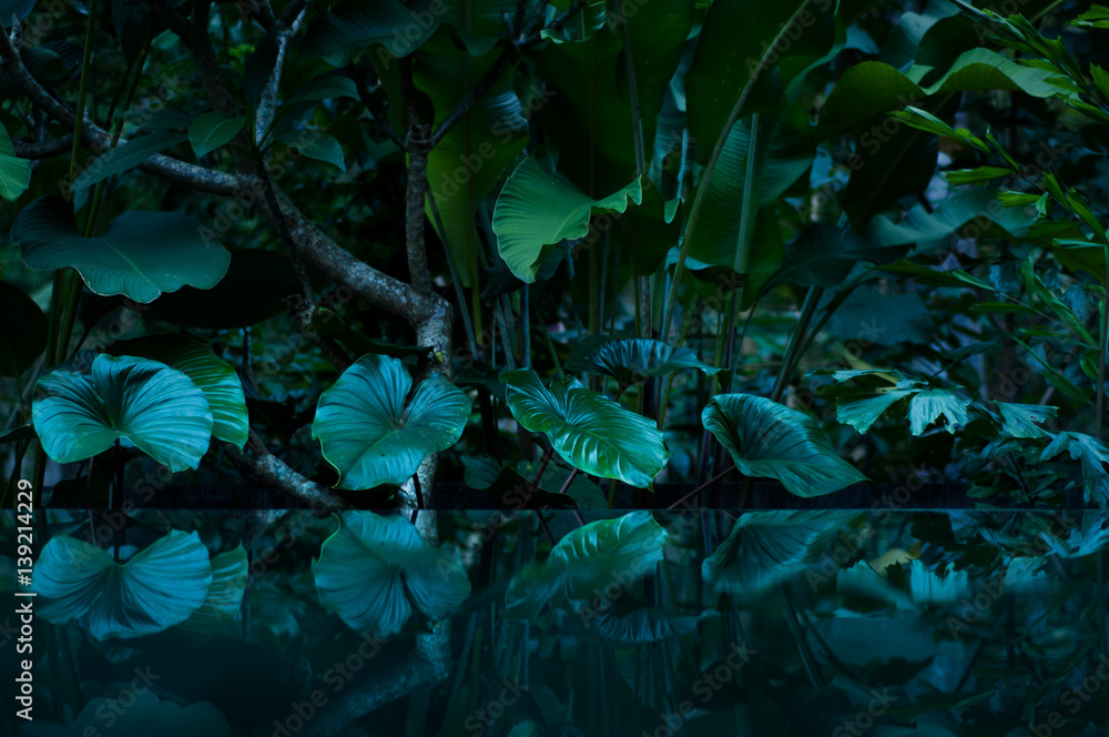 Fototapety, obrazy: tropical rain forest with water mirror