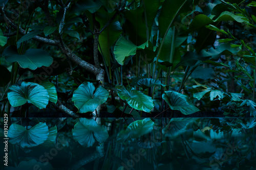 Spoed Fotobehang Bos tropical rain forest with water mirror