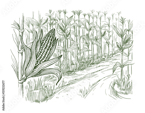 Foto Hand drawn vector illustration sketch cornfield with a road between fields