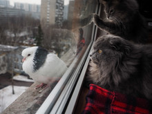 Cats Looking At A Pigeon Throu...