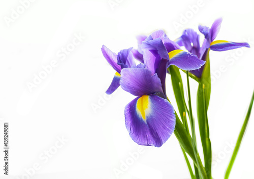 Foto op Plexiglas Iris Spring flower frame made from iris
