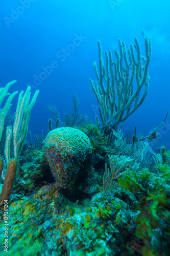 Staande foto Koraalriffen Underwater scene with colorful tropical fish near the sea reef