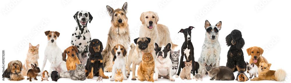 Fototapety, obrazy: Haustiere