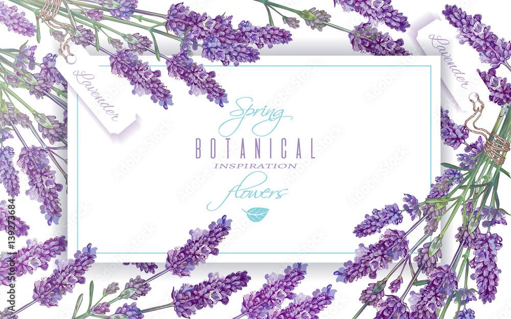 Fototapety, obrazy: Lavender flowers banner