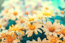 Flowers Lawn. Vintage Flower Background In The Garden. Pastel Color Palette
