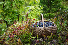 Wild Berries In A Basket On Fo...