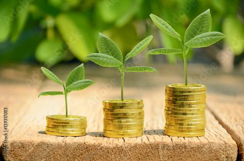 Fotografía  Investment, money, interest and financial concept.
