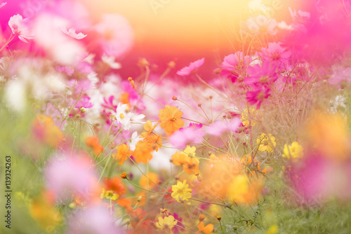 zachod-slonca-kosmosu-kwiat-gaeden