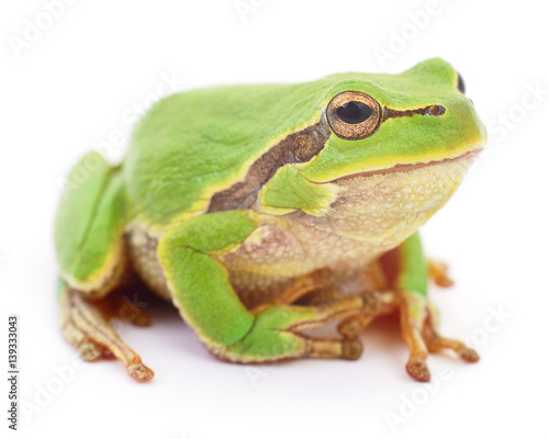 Tuinposter Kikker Green frog isolated.