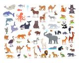 Fototapeta Fototapety na ścianę do pokoju dziecięcego - Big Set of World Animal Species Cartoon Vectors