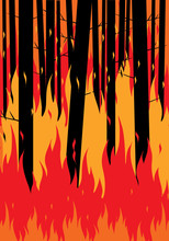 Forest Fire Background