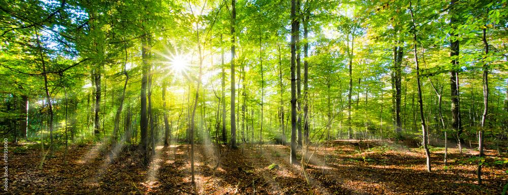 Fototapety, obrazy: Grünes Wald Panorama im Sonnenschein