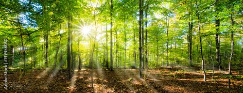 Fototapeta Grünes Wald Panorama im Sonnenschein obraz