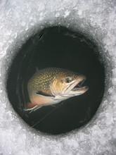 Winter Fishing On Lake. Catchi...