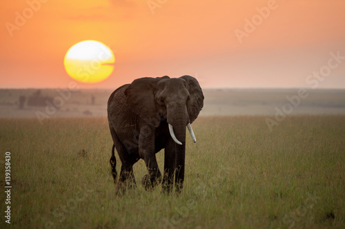 Foto op Canvas Olifant Elephant at sunrise on the Maasai Mara