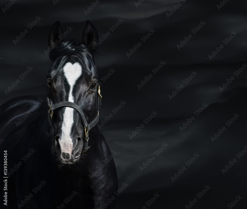 Portrait of black horse with heart marks. Unigue and rare colored.