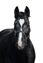 Black Horse With Heart Marks On White Background. Unigue And Rare Colored.