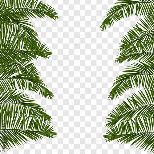Summer green palm leaf transparent Wall mural