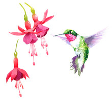 Watercolor Bird Hummingbird Fl...