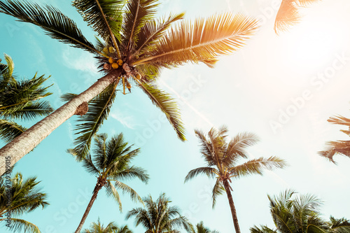 Foto op Canvas Palm boom Coconut palm tree on beach with sunlight in summer - vintage color tone.