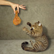 The man is holding a roasted chicken leg. A cat wants to take it.