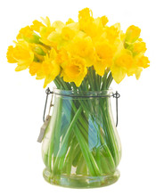 Bright Yellow Daffodils Flower...