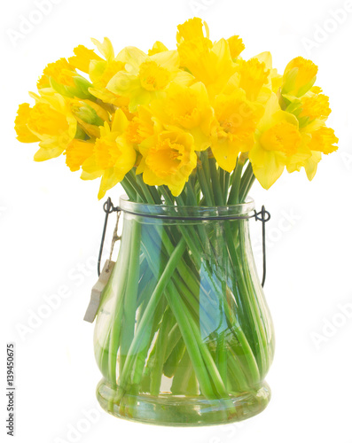 Bright yellow daffodils flowers in glass vase isolated on white background
