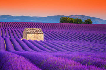 Fototapeta Lawenda Spectacular lavender fields in Provence, Valensole, France, Europe