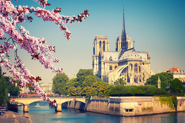 FototapetaNotre Dame de Paris at spring, France